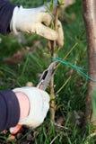 Estaca da árvore de pêssego imagens de stock royalty free