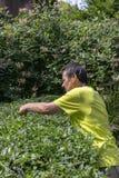 estaca de jardinagem da conversão Fotografia de Stock Royalty Free