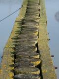 Estacas de madeira velhas Imagens de Stock