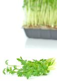 Estacas do Watercress Imagens de Stock Royalty Free