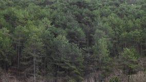 Estación de acoplamiento en tragos cerca del bosque alto del pino almacen de video