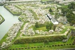 Estación de Cherry Blossom en el parque de Goryokaku Fotografía de archivo libre de regalías