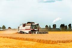 Estación de la cosecha Trigo del corte de la cosechadora en el campo Fotografía de archivo libre de regalías