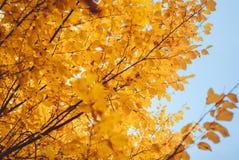 Estación de las hojas de otoño hermosas Imágenes de archivo libres de regalías