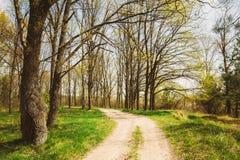 Estación de primavera en parque Hierba joven verde, árboles en la parte posterior del cielo azul Foto de archivo libre de regalías