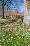 Estación de primavera soleada en parque natural sueco Foto de archivo
