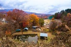 Estación del arce (Koyo) en Japón Imagen de archivo
