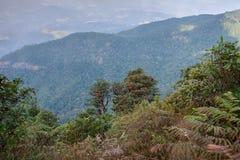 Estación del bosque del inthanon de Doi de la azalea roja floreciente, Imágenes de archivo libres de regalías