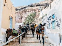 Estación del burro en Santorini Fotos de archivo libres de regalías