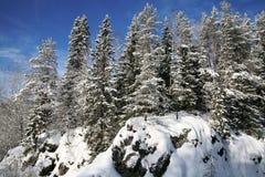 Estación del invierno en bosque en la montaña Nevado Foto de archivo