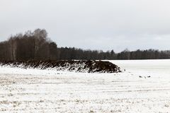 Estación del invierno foto Imágenes de archivo libres de regalías