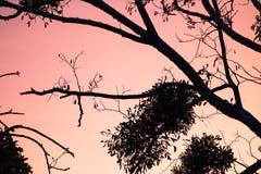 Estación del invierno que viene - silueta de las ramas de árbol desnudas en cielo anaranjado de la puesta del sol Fotografía de archivo libre de regalías