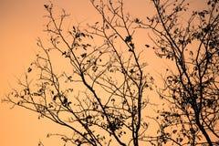 Estación del invierno que viene - silueta de las ramas de árbol desnudas en cielo anaranjado de la puesta del sol Imagenes de archivo