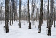 Estación del jarabe de arce en Canadá Fotos de archivo libres de regalías