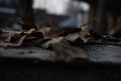 Estación del otoño imágenes de archivo libres de regalías