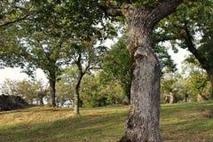 Estación del otoño Foto de archivo libre de regalías