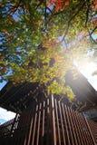 Estación del otoño de la pagoda Foto de archivo