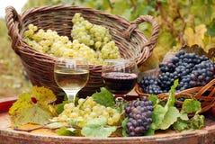 Estación del otoño del vino blanco rojo y Fotografía de archivo libre de regalías