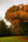 Estación del otoño en Bélgica Fotos de archivo libres de regalías