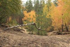 Estación del otoño en bosque Fotografía de archivo libre de regalías