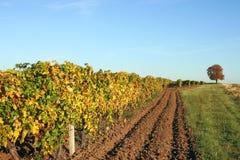 Estación del otoño del viñedo Foto de archivo libre de regalías