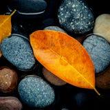 Estación del otoño y conceptos pacíficos Hoja anaranjada en piedra del río Imagenes de archivo