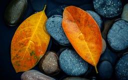 Estación del otoño y conceptos pacíficos Hoja anaranjada en piedra del río Imágenes de archivo libres de regalías