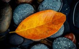 Estación del otoño y conceptos pacíficos Hoja anaranjada en piedra del río Fotos de archivo