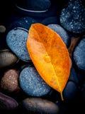 Estación del otoño y conceptos pacíficos Hojas de la naranja que caen en ri Foto de archivo