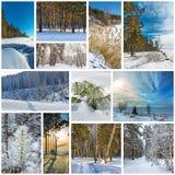 Estación-invierno del collage La naturaleza de Siberia occidental imágenes de archivo libres de regalías