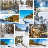 Estación-invierno del collage La naturaleza de Siberia occidental imagenes de archivo