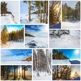 Estación-invierno del collage La naturaleza de Siberia occidental fotografía de archivo libre de regalías