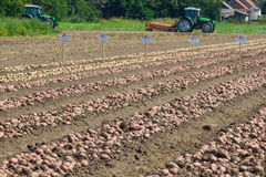 Estación que cosecha las patatas Foto de archivo libre de regalías