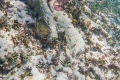 Estación subacuática de la limpieza Foto de archivo libre de regalías