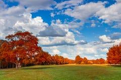 Estacione com o prado verde do prado e do verde floresta e o céu azul Cena do verão Foto de Stock Royalty Free