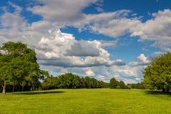 Estacione com o prado verde do prado e do verde floresta e o céu azul Cena do verão Foto de Stock