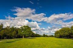 Estacione com o prado verde do prado e do verde floresta e o céu azul Cena do verão Fotografia de Stock