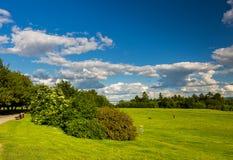 Estacione com o prado verde do prado e do verde floresta e o céu azul Cena do verão Fotos de Stock Royalty Free