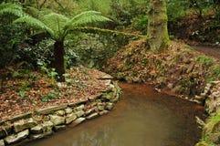 Estacione el arroyo con plamtree Foto de archivo libre de regalías