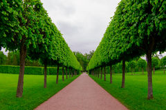 Estacione los árboles Imágenes de archivo libres de regalías