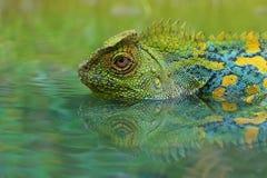 Estada de Dragon Forest na água imagem de stock royalty free