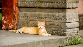 Estada do gato do gengibre no chinês imagens de stock