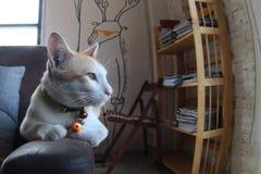 Estada do gato no sofá Imagens de Stock