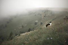 Estada preto e branco de border collie do cão no campo verde fotos de stock royalty free