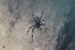 Estada silenciosa da aranha preta fresca foto de stock