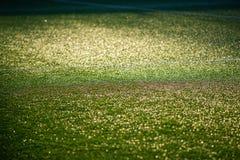 Estadio de fútbol con el campo artificial verde Fotografía de archivo libre de regalías