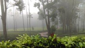 Estado del té de Loolkadura imágenes de archivo libres de regalías