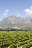 Estado escénico Suráfrica del vino de Boland del cabo Fotografía de archivo