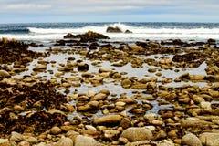 Estado Marine Reserve de Asilomar Imagens de Stock