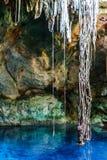 Estalactitas y raíces en el Cuzama Cenote, Yucatán, México imagen de archivo libre de regalías